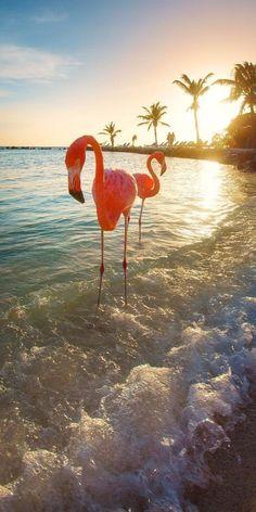 Flamingos on the beach #flamingo #flamingos #pinkflamingo