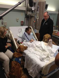 Comfort dogs visit Lee Ann Yanni, a Boston bombing survivor. Lee relished the visit today as two golden retrievers gazed adoringly at the runner right before she underwent surgery on her shattered leg. At the time of the bombings, Lee had been training to run her first full marathon in Chicago in October.