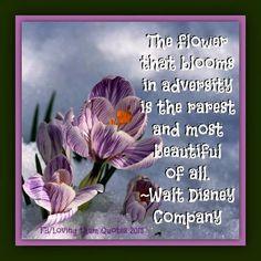 Flower quote via Loving Them Quotes on Facebook