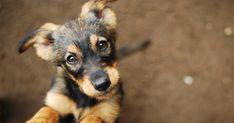 Érthetetlen: eddig 8 megyei településen, több mint 70 kutyánál tapasztalták a gazdák a kétségbeejtő jelenséget Hajdú-Biharban. Mythological Names, Mythological Characters, Large Dogs, Small Dogs, Best Male Dog Names, Dog Food Ratings, Dog Commands, Fuzzy Coat, Pet Dogs