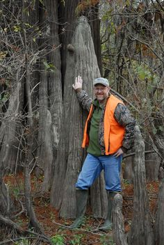 Some of the trees are over 1,000 years old, making their age just as impressive as their size. Bald Cypress Tree, Cypress Trees, Giant Tree, Natural Wonders, Small Towns, Mississippi, The Incredibles, Sky, Nature
