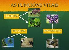 As funcións vitais que realizan os seres vivos son a nutrición, a relación e a reproducción. Grazas a estas funcións mantéñense con vida. #Earth #cells #water...