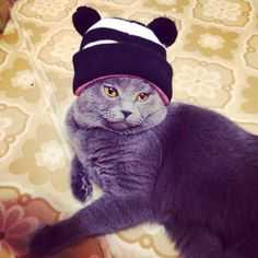 And you are insulated for winter? - http://unusual-cats.com/and-you-are-insulated-for-winter/