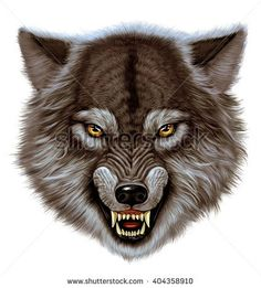 Angry wolf head. White background