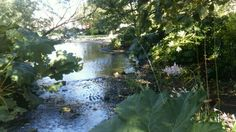 Pond in Sunderland's Winter Gardens