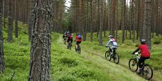 A group of mountain bikers on a trail in the Cairngorm National Park -  Rothiemurchus near Aviemore.