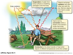 survival conduction convection radiation - Google Search