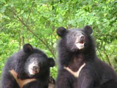 FLORA AFGHANISTAN | 動物】尋熊記─我與台灣黑熊的故事:第一隻熊
