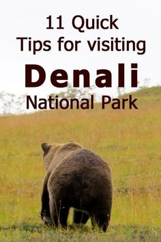 Visiting Denali National Park - Trip Report & Tips - Trip Memos Alaskan Vacations, Alaskan Cruise, Family Vacations, Dream Vacations, Alaskan Honeymoon, Vacation Places, Italy Vacation, Vacation Spots, Alaska Travel