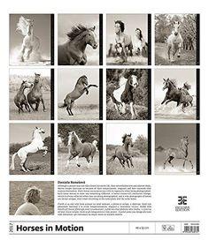 Horses Dreaming Calendar - Calendars 2016 - 2017 Calendar - Wild Horses Calendar - Animal Calendar -