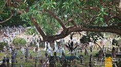 MALAYSIA | Melaka's Bukit Cina, the Largest Chinese Cemetery ...