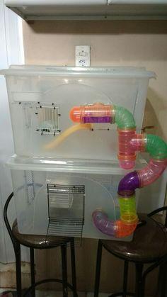 Um duplex de caixa organizadora, super lindo para um hamster muito amoroso!