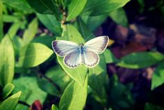 Butterfly By Nokia Mobile phone