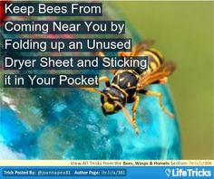 Bees, Wasps & Hornets - Keep Bees From Coming Near You by Folding up an Unused Dryer Sheet and Sticking it in Your Pocket