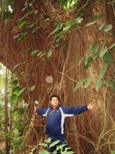 Sacred Groves, Ecological Saviours? The Story from Sikkim--India - Himalayan Connections