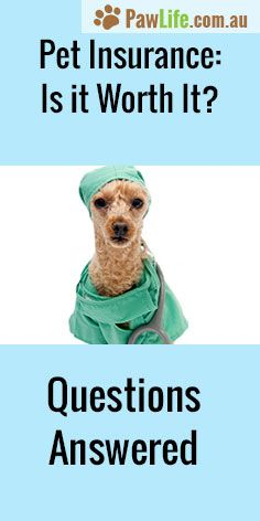 Is Pet Insurance worth it? What you need to know now. #petinsurance #petcare #healthcare #peted #petemergency #pethealth #doghealth