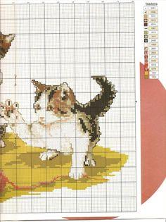 Playful Kittens 3
