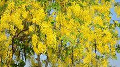 Plants, Painting, Kerala, Art, Landscaping, Gardens, Shrubs, Art Background, Painting Art
