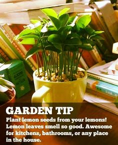 Going to start doing this.  Should have been started...smh.  #flowers #flower #aquawardbeauty #petal #petals #nature #beautiful #love #pretty #plants #blossom #sopretty #spring #summer #flowerstagram #flowersofinstagram #flowerstyles_gf #flowerslovers #flowerporn #botanical #floral #florals #insta_pick_blossom #flowermagic #instablooms #bloom #blooms #botanical #floweroftheday