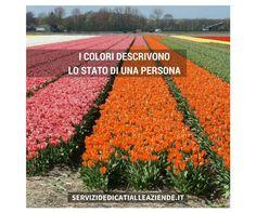 Se vuoi sapere che tipo sei, Chiedigli quali colori gli piacciono !! #chetiposei #icolorideglialtri
