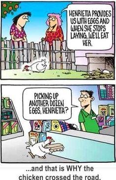 Smart chicken!
