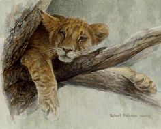 """Lion Cub"" by Robert Bateman"