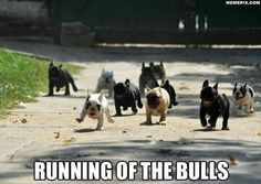 Running of the Bulls- I love love love this!!!  If this doesn't make you smile than you're dead inside!!!