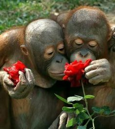 photographs that capture the precise moment of pleasure and delight that they feel the animals when they smell a flower. Primates, Mammals, The Animals, Baby Animals, Funny Animals, Adorable Animals, Nature Animals, Beautiful Creatures, Animals Beautiful