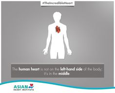 Yes, your heart is located right in the middle. #TheIncredibleHeart #AsianHeartInstitute