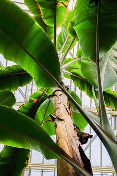 Tropical Leaf Pictures | Download Free Images on Unsplash