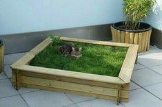 who needs a sandbox? - Giulia Pagana - - wer braucht schon einen Sandkasten who needs a sandbox? Cat Grass, Cat Hacks, Gatos Cats, Cat Playground, Cat Garden, Garden Beds, Cat Enclosure, Cat Room, Outdoor Cats