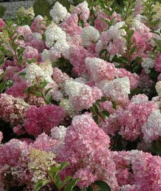 hydrangea-pan-vanille-fraise-2_origin_img.jpg (808×958)