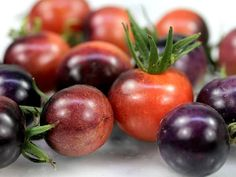 Blue Berries Tomato The flavor is intensely fruity and sugar-sweet! Plants are Blue Berries Tomato T Growing Tomatoes From Seed, Growing Tomatoes In Containers, Growing Seeds, Grow Tomatoes, Freezing Tomatoes, Marinated Tomatoes, Canning Tomatoes, Roasted Tomatoes, Fruit And Veg