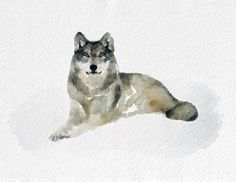Wolf Watercolor Painting Art Print  Animal by NovosadWatercolors, $20.00
