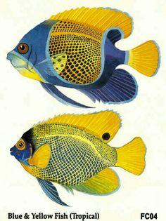 Pin von c d auf art pinterest goldfisch fische for Japanische kampffische