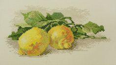 Ветка с лимонами.