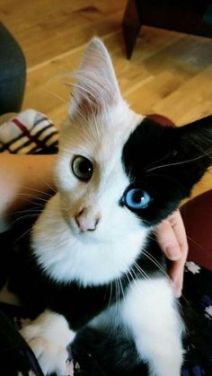 Cute Funny Kittens Pictures even Cutest Kittens Ever Pictures . - Kittens Cutest Cute Funny Kittens Pictures even Cutest Kittens Ever Pictures . Beautiful Kittens, Cute Cats And Kittens, Pretty Cats, Baby Cats, I Love Cats, Animals Beautiful, Funny Kittens, Kittens Cutest Baby, Adorable Kittens