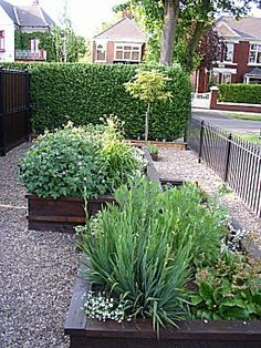 Image of Suzie Nichols' Small Front Garden Design. The garden was built by the clients. I like the use of raised beds surrounded by gravel -- gives a space for plants but also easy to contain and access.