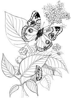 Butterfly Coloring Pages 30 | Free Patterns | Yarn