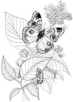 Great Butterfly Coloring Book 73 Butterfly butterflies Pinterest
