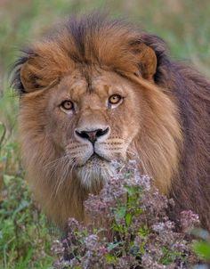 AnimalsFree #BigCatFamily