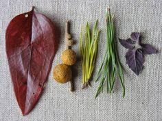 FEBRUARY ~ Color 1 ~ Seasonal Spectrum ~ leaf, gall, pine needles x 2, leaves