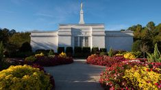The dates for open houses and rededications have been released for the Raleigh North Carolina and the Baton Rouge Louisiana Temples of The Church of Jesus Christ of Latter-day Saints. Both temples will have only one rededicatory session. Mormon Temples, Lds Temples, Later Day Saints, Raleigh North Carolina, Lds Church, Open House, Travel Photography, Around The Worlds, Jesus Christ
