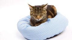 Cama de gatos casera