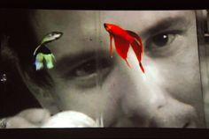 Rumble Fish - Mickey Rourke