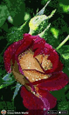 Exotic Flowers, Cross Stitch, David, Rose, Floral, Scrappy Quilts, Cross Stitch Art, Good Morning Greetings, Earth