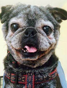 Our pug, Tokie!