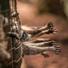 Be their voice!!! They are reaching out for help!!! Animals on their way to being skinned for the fur industry.