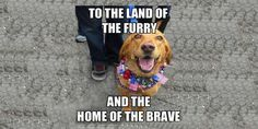 Are you looking for funny of july memes? We have come up with a handpicked collection of of july memes. Funny 4th Of July, Happy 4 Of July, Fourth Of July, 4th Of July Images, Independence Day Quotes, Famous Quotes About Life, Very Funny Memes, Home Of The Brave, Facebook Image