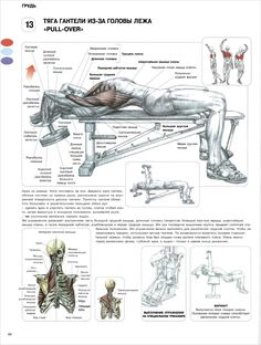 Many exercise and gym beginners make the mistake of focusing on the more hyped muscle groups like abs or biceps. Leg day workout for weight loss is important and plays a key role in both getting fit, losing weight, and staying that way. Best Chest Workout, Chest Workouts, Gym Workouts, At Home Workouts, Workout Fitness, Chest Exercises, Swimming Workouts, Swimming Tips, Body Exercises
